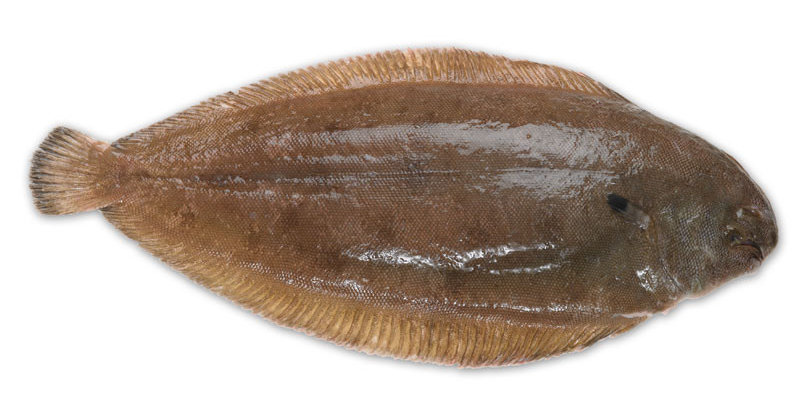 WILD DOVER SOLE 300/400g - OUT OF STOCK