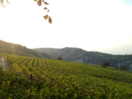 Collaboration with Consorzio Barolo, Barbaresco, Langhe e Dogliani