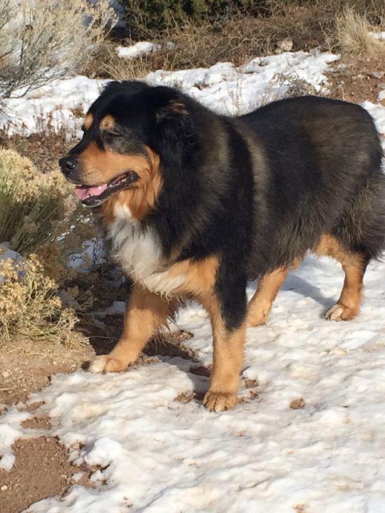 Beloved Benny Dog