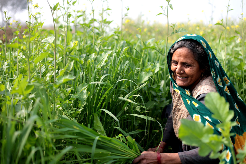 Indian woman in a field