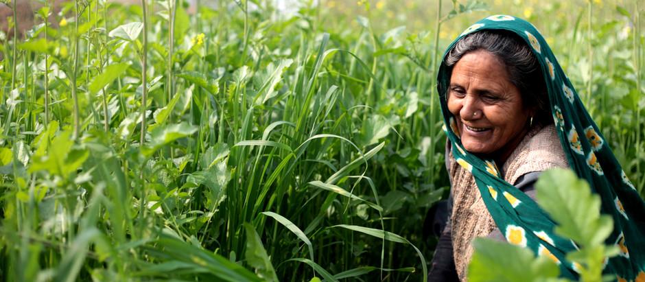 Ayurveda-Kur in Südindien - ein Erfahrungsbericht