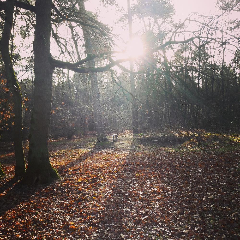 De stilte opzoeken in de natuur