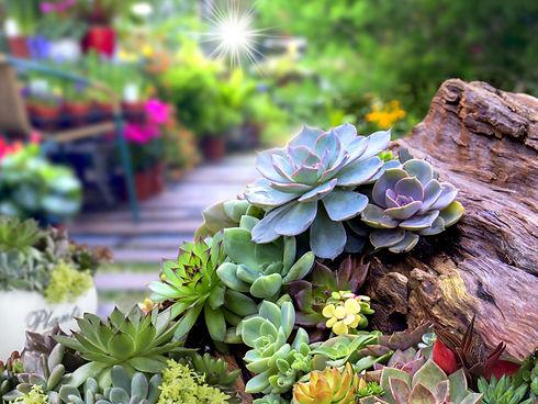 succulent-garden.jpg
