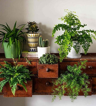 Plant-house-plants-in-a-dresser.jpeg