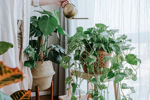 how-to-fertilize-houseplants-1902846-her