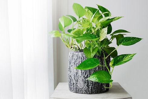 1800x1200_health_benefits_of_houseplants