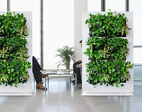 indoor_plant_wall.jpg
