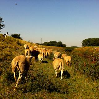 herderen langs de Dijle