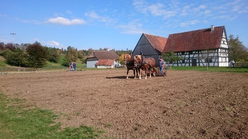 Landwirtschaft früher Ackerpferde Bauernhofmuseum