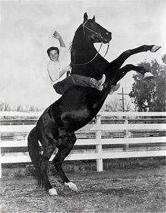 Fury TV Serie Pferd
