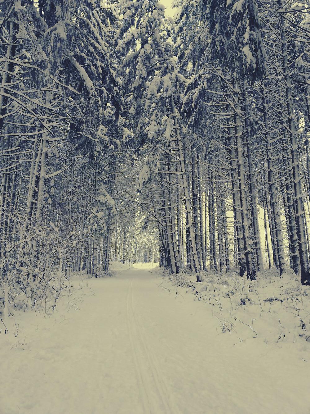 winter bayern vintage 50er waldwinter