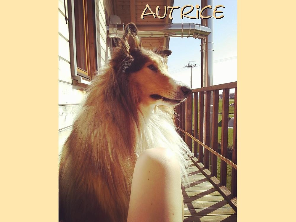 Ein Leben ohne Hund ist möglich aber sinnlos, Collie, Lassie