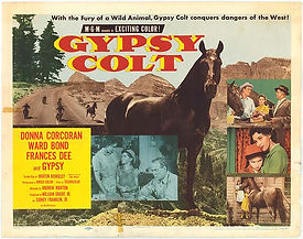 Gypsy Colt Highland Dale