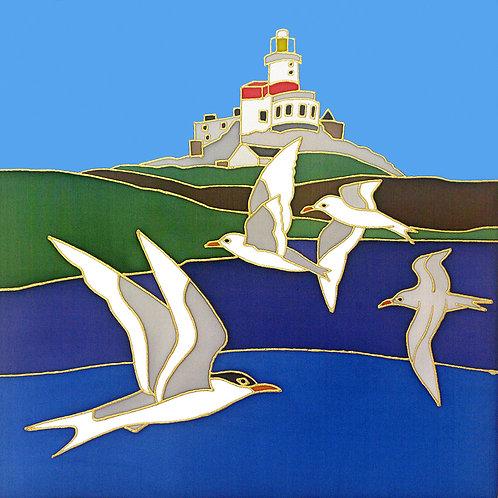 Terns at Skerries Mounted Print