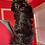 Thumbnail: Toy Shih Poo Litter
