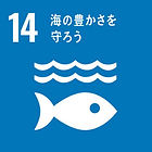 14 海の豊かさを守ろう