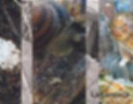 consulenza materiali per impianto di allevamento lumache, elicicoltura