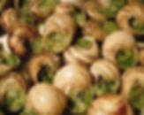 ricetta+borgogna+lumache+aspersa+muller+valle+del+belice+roccamena+allevamento+elicicoltura+sicilia+escargot+made+in+italy