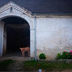 Impression(ism) of Landscape-La Maison de Campagne II