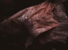 Panneggio in rosa- II