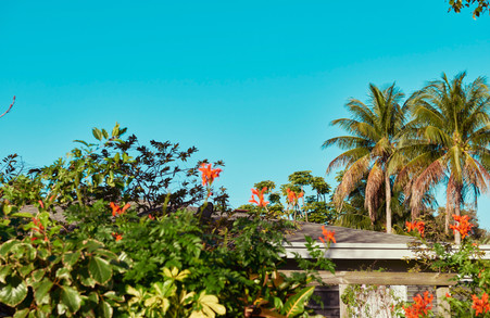 Miami 2020-PIC 11-1308 copy.jpg