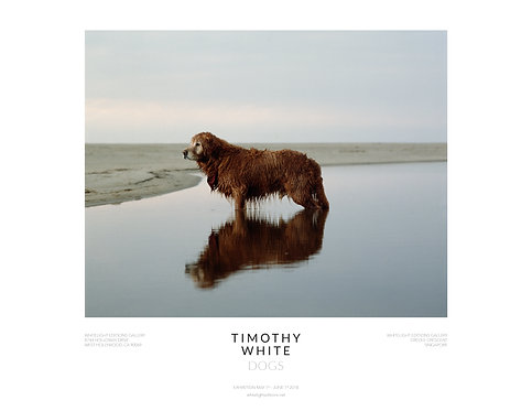 Wet Dog Poster by Timothy White