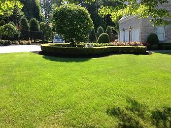 pretty lawn.JPG