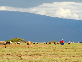 Maasai lose 5 Year Battle to Revert Land Sale and Protect their Indigenous Knowledge