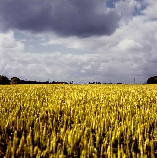 graanland