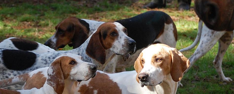 leaderofthehounds.jpg