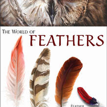 featherguide.jpg