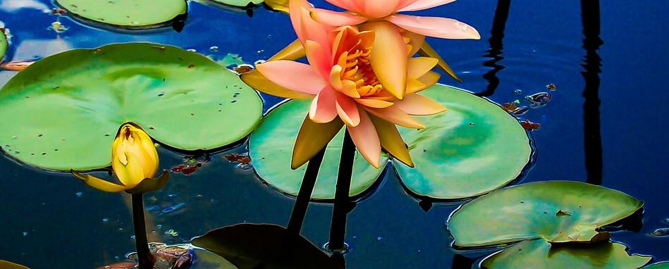 Reflection of Monet.jpg