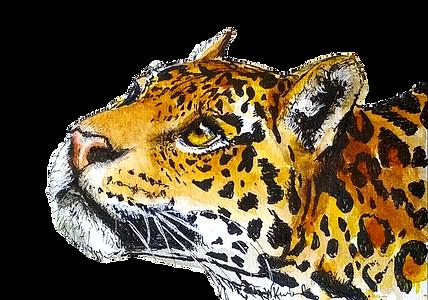 jaguar1_edited.png