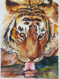 """""""Linda's Tiger"""""""