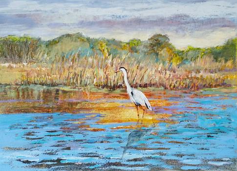 """Blue Heron Along the Virginia Tidal Basin"""