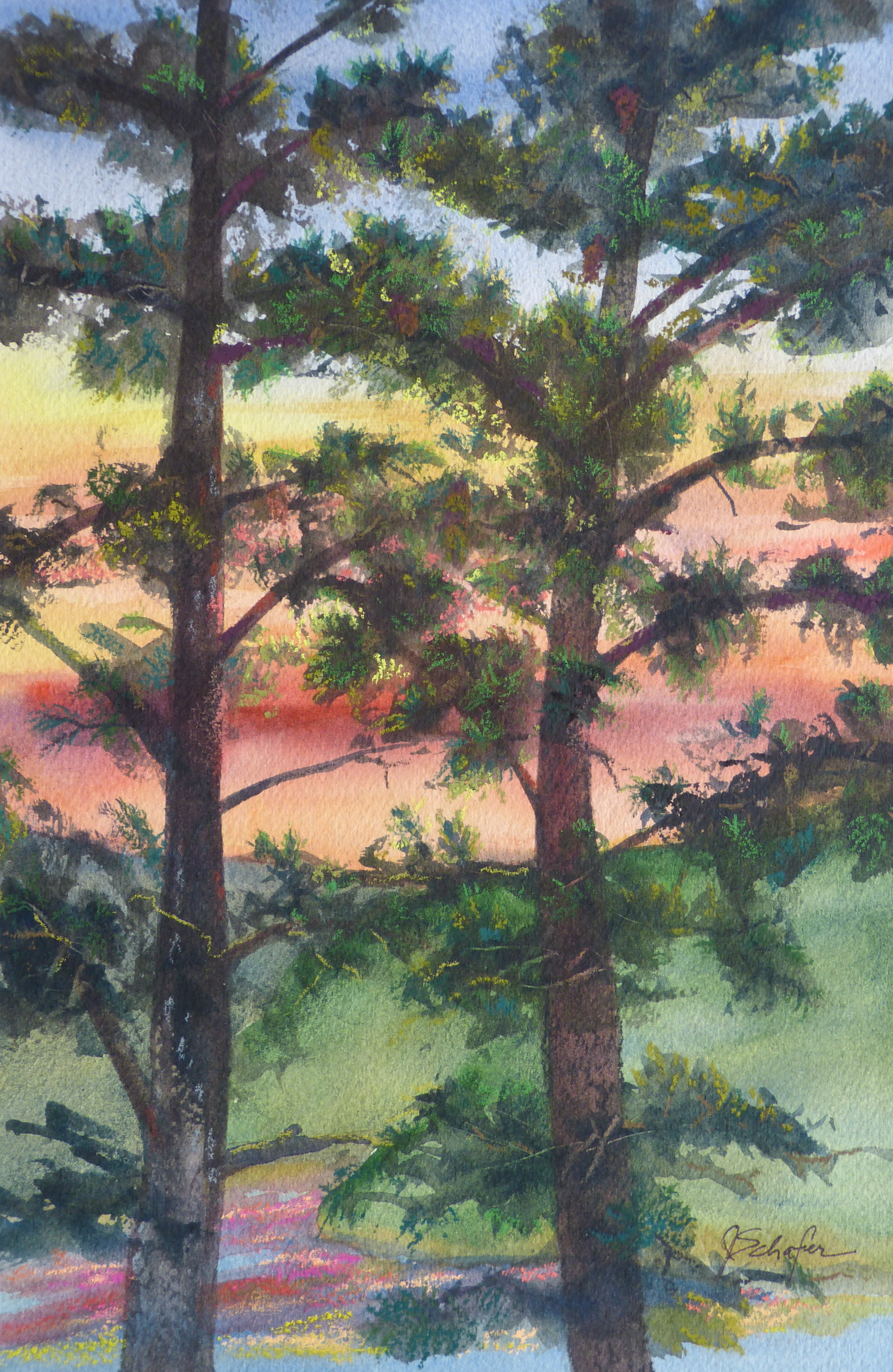 """Sunset in the Pines"""