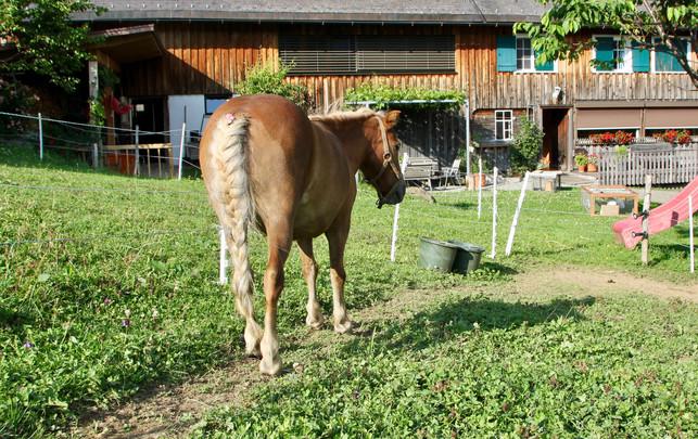 Pony Pauline