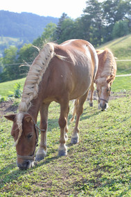 Pony Pauline und Sissi