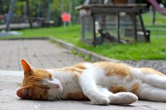 Katze Mitzi am Träumen