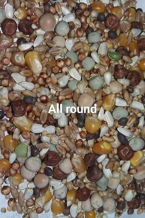 All round pigeon mix
