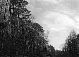 Forêt de Moutier, 2021