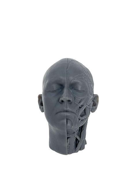 Modelos-Anatomicos-3DSmartLabs-Impresion