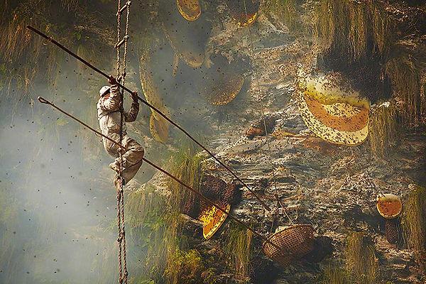 Apiculteur-Nepal.jpg