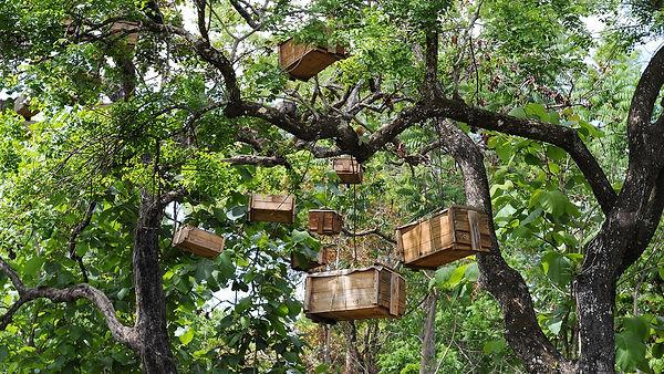 apiculteur-africain2.jpg