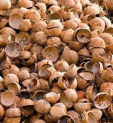 Coconut.shells.jpg