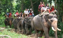 นั่งช้าง4
