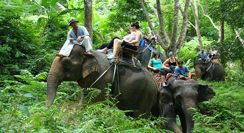 นั่งช้าง2