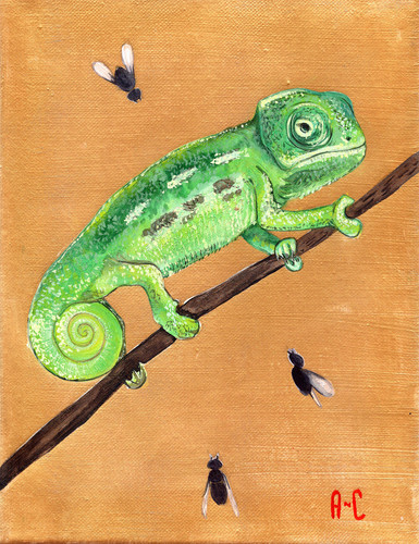 lime-green-chameleon.jpg
