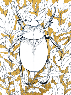 Dung beetle.png