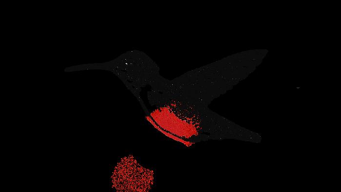 hummingbird_TRANSPARENT.png